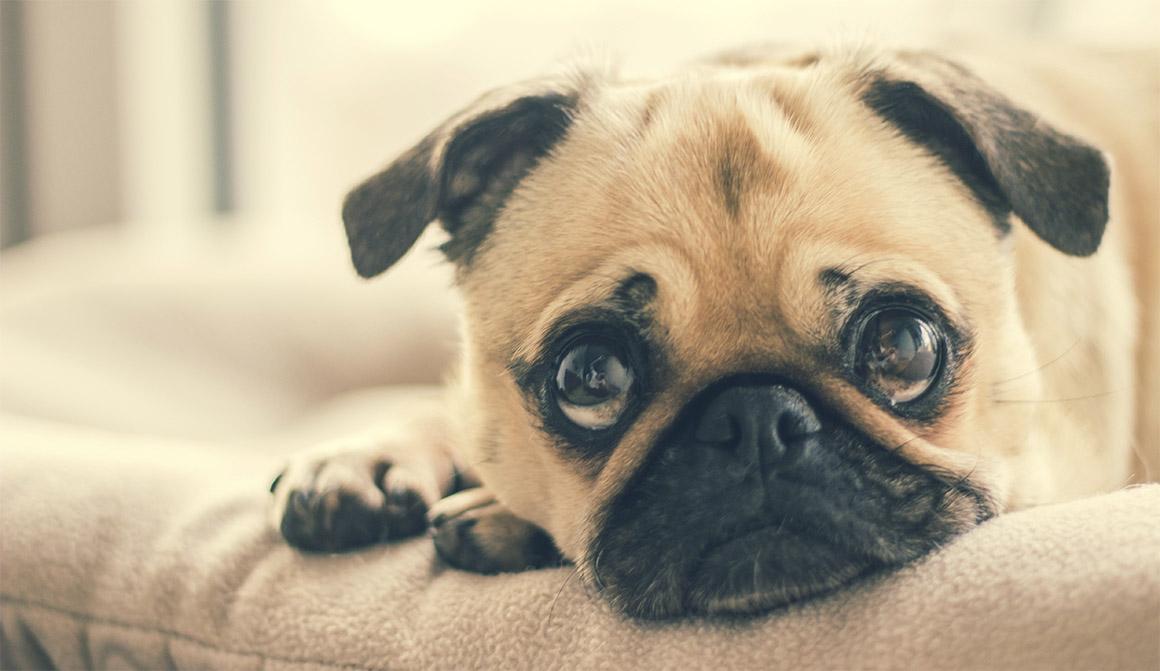 Отдых собаки у джакузи