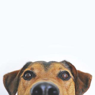 Животные и гидромассаж: могут ли собаки отдыхать в СПА-бассейне